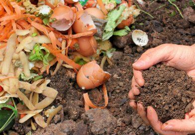 Compost écologie